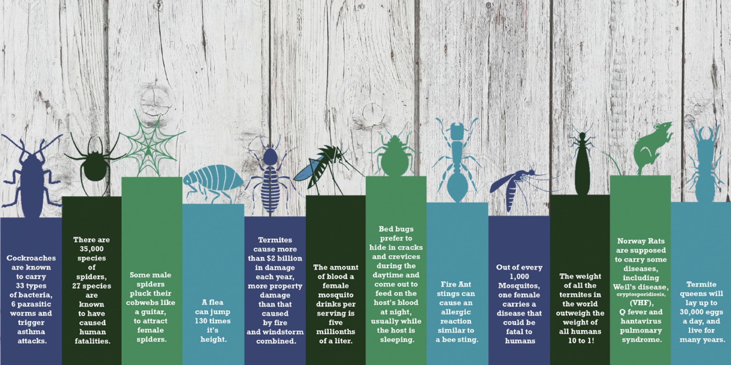 Five Essential Spring Pest Control Tips
